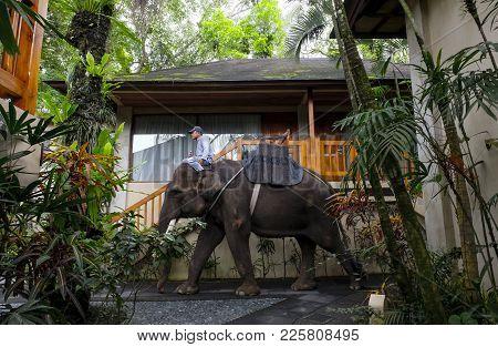 Mahout Ride A Sumatran Elephant