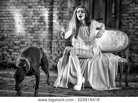 Sensual Woman Call Dog. Girl In Fashionable Dress, High Heel Shoes On Sofa. Pet, Companion, Friend,