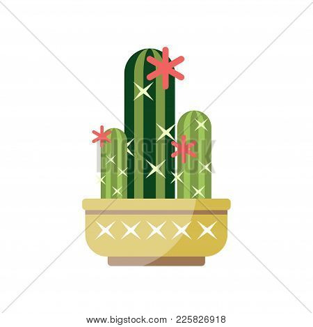 Flowering Cactus House Plant, Indoor Flower In Pot, Elegant Home Decor Vector Illustration On A Whit