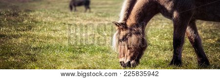 Horses Walking And Grazing In A Virginia Meadow.