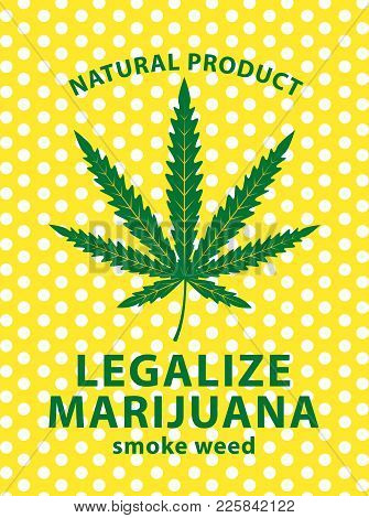 Vector Banner For Legalize Marijuana With Cannabis Leaf On A Background Of Polka Dots. Natural Produ