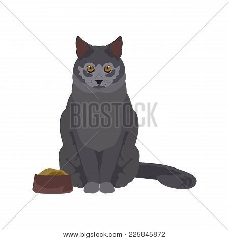Flat Illustration Of A Cat In Vector Format