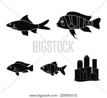 Botia, Clown, Piranha, Cichlid, Hummingbird, Guppy, Fish Set Collection Icons In Black Style Vector