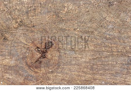 Surface Of The Old Cracked Tree As A Natural Wood Background Or Texture.  Structure Of Old Wood
