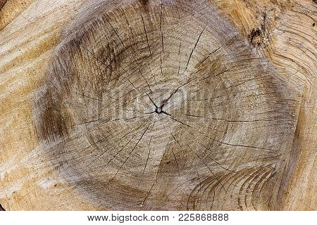 Surface Of The Felled Tree As A Natural Background Or Texture