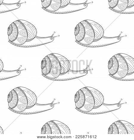 Snail Black And White Colors Vector Illustration. Invertebrates Mollusks Wildlife. Wild Life Zen Tan