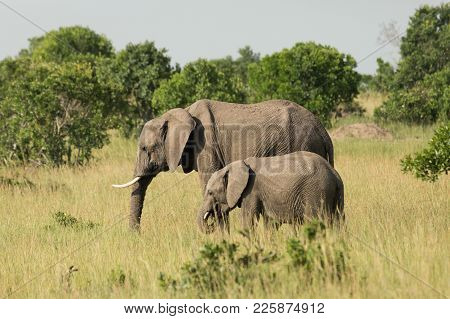 Mother And Baby Elephant In The Grasslands Of The Maasai Mara, Kenya