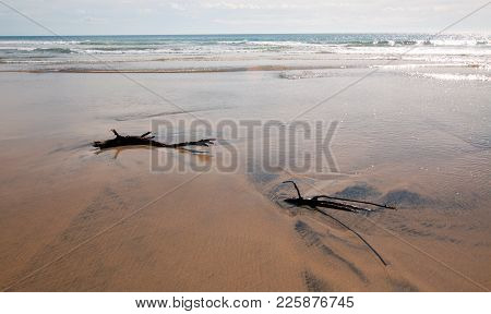 Driftwood In The Water At Cerritos Beach Surf Spot In Baja California In Mexico Bcs