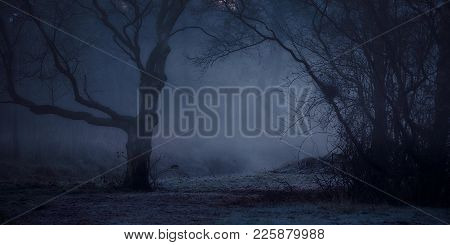 A Misty And Mysterious Forest Shivering On The Slightly Frozen Ground In The Early Winter Morning Li
