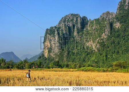 Harvested Rice Field Surrounded By Rock Formations In Vang Vieng, Laos. Vang Vieng Is A Popular Dest
