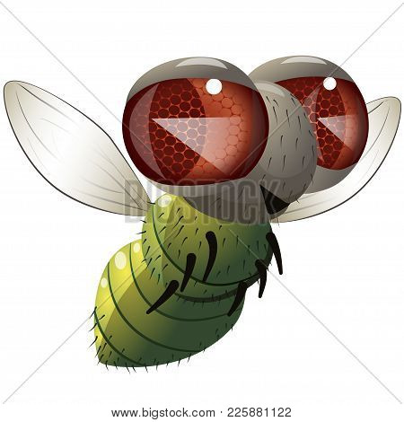 Comical Fly. Illustration Of Cartoon Character Flying Green Fly Over White Background.