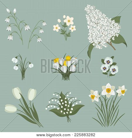 Collection Of White Flowers On A Gray Background. There Are Tulips, Snowdrops, Lilies Of The Valley,