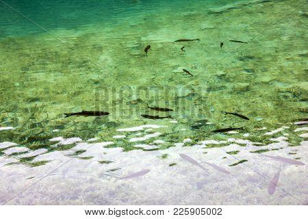 Trout Fish Farm, Croatian Plitvice Lake, Croatia
