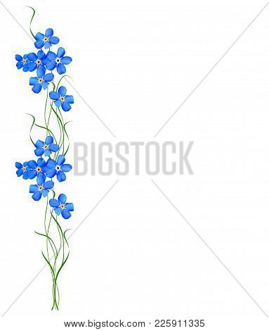 Spring Flower Forget-me-not Isolated On White Background.