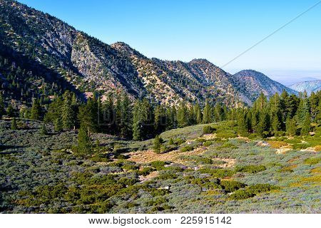 Alpine Meadow Surrounded By A Pine Forest And Rugged Terrain Taken In The San Gabriel Mountains, Ca