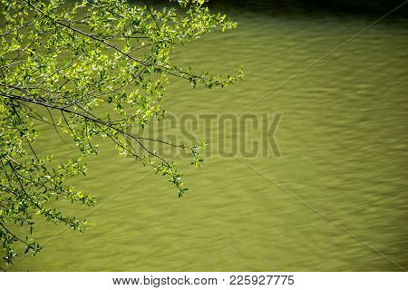 Part Of A Tree And Leaves As A Natural Background Texture