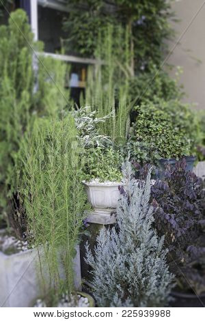 Green Houseplant Exterior In Garden, Stock Photo