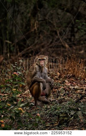 An Indian Monkey Potrait. In The Woods.