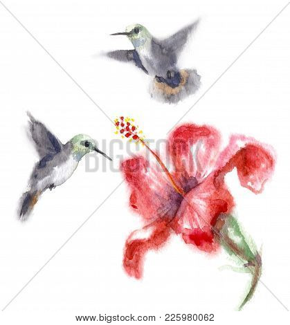 Watercolor Painting.  Hand Drawn Humming Birds And Flower Isolated On White. Small Hummingbirds Flyi