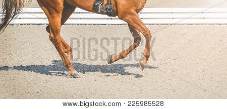 Sorrel Horse, Advanced Dressage Test On Equestrian Competition, Equine Theme. Saddle, Bridle, Boots