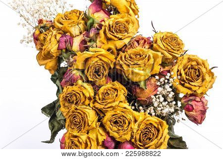 Dry Yellow Roses Isolated On White Background.