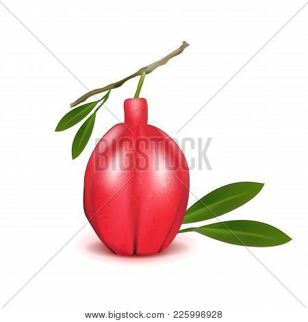 Realistic Ackee 3d Vector Aki Blighia Sapida Fruit With Leaves Isolated On White Background. Ackee N