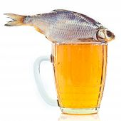 salted fish on a beer mug isolated on a white background poster
