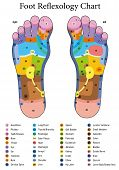 Foot reflexology. Alternative acupressure and physiotherapy health treatment. Zone massage chart with colored areas. Numbering and listing of names of internal organs and body parts. poster