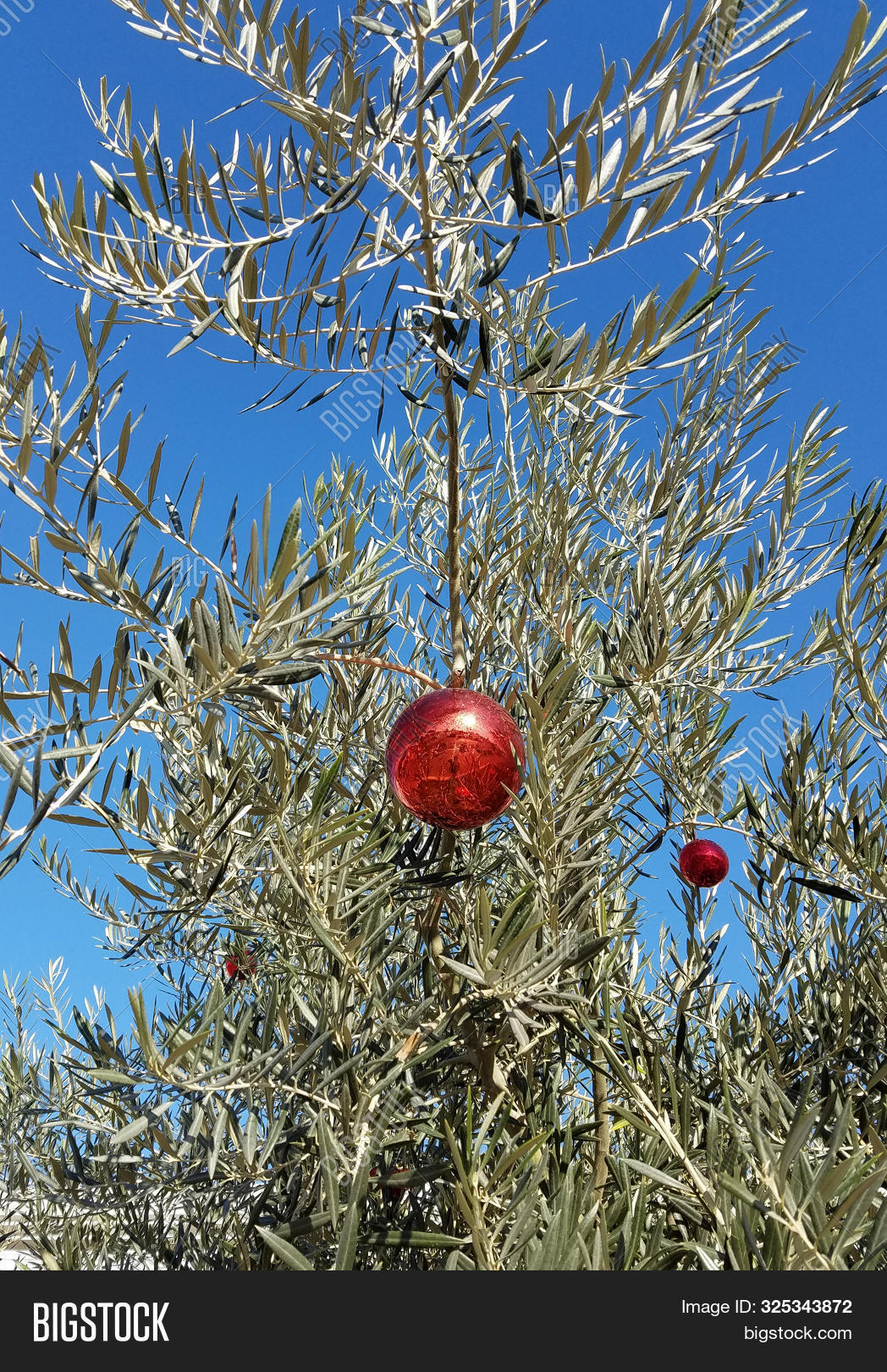 Olive Tree Christmas Image Photo Free Trial Bigstock