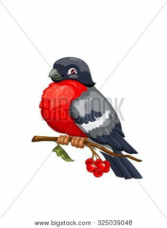 Bullfinch Cartoon Winter Bird Sitting On Branch Of Viburnum Tree With Red Berries And Green Leaf. Ve