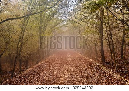 Forest detail with misty path