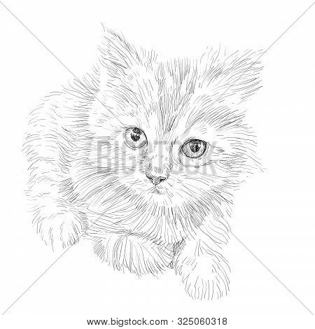 Drawing Of Adorable Cat Lying On White Background. Furry Cute Kitten With Big Eyes.