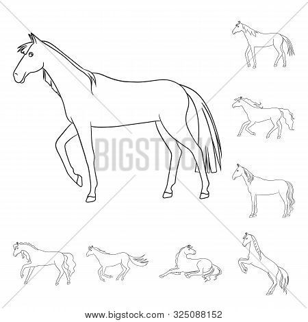 Vector Illustration Of Stallion And Galloping Icon. Set Of Stallion And Riding Stock Symbol For Web.