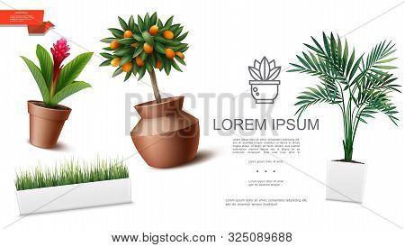 Realistic Houseplants Template With Red Ginger Flower Green Palm Leaves Grass Kumquat Tree In Differ