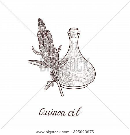 Vector Drawing Quinoa Oil, Bottle Of Vegetable Oil And Chenopodium Quinoa, Hand Drawn Illustration