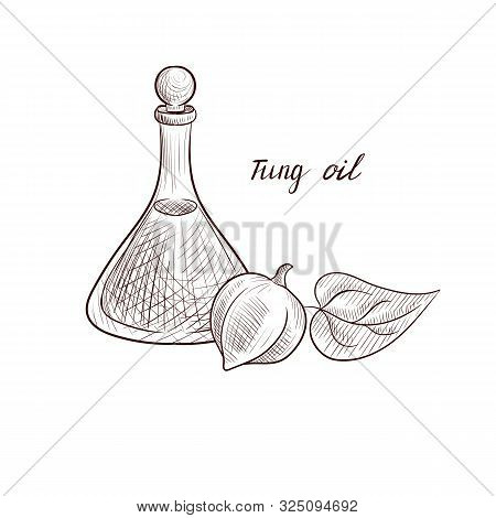 Vector Drawing Tung Oil, Bottle Of Vegetable Oil And Tung Tree Fruit, Hand Drawn Illustration