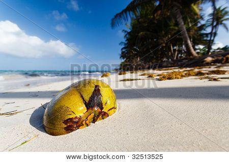 Coconut On A Deserted Beach