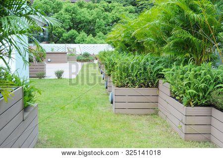 Rooftop Garden, Rooftop Vegetable Garden, Growing Vegetables