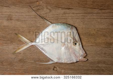 Moonshine Joshua Tropical Caribbean Fish On Wooden Board With Single One Organic Fresh Seafood Food
