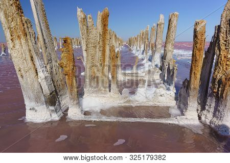 Textured Fragments Of A Wooden Dam On The Delightfully Bright Pink Lake Sasyk-sivash. The Old Wood I
