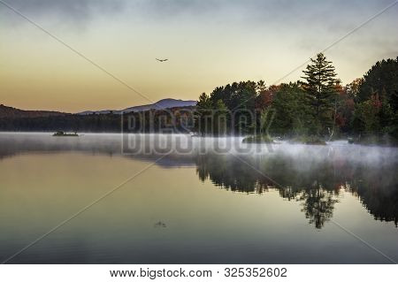 Bird Flying Over Adirondack Lake New York