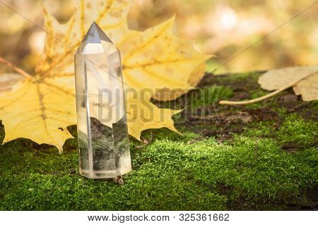 Large Transparent Crystal Of Quartz Gemstone On Background Of Moss Autumn Leaves. Chalcedony Gem In