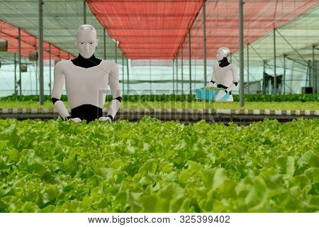 3d Rendering Ai Artificial Intelligent Robot Work In Smart Farm, Agriculture Concept, Robot Work For