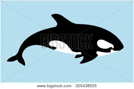 Orca Killer Whale, Flat Illustration. Sea Animal