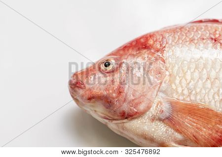 Close Up Fresh Raw Fish,red Tilapia,nile Tiapia (oreochromis Niloticus-mossambicus)