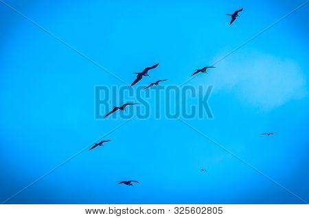 Birds Flying Together But Not In Formation With A Blue Sky Background, Over The Ocean, San Pedro, Ma