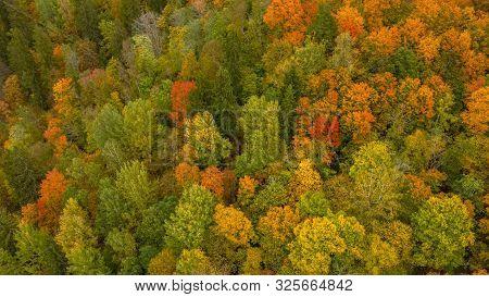 Autumn Landscape View Of The Autumn Bright Multi-colored Trees, Green, Orange And Reddish Tint. Autu