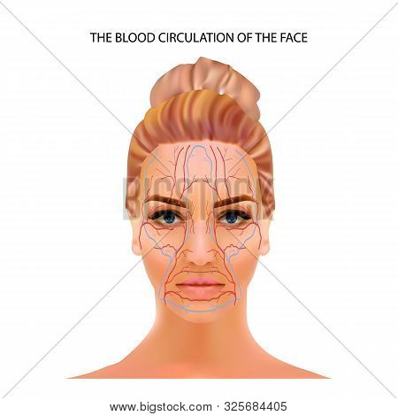 The Blood Circulation Of The Face, Veins And Capillaries Located Head Persons