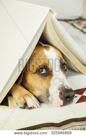 Young Dog Under A Book In The Form Of A House Roof And Looks Up Frightened. The Concept Of Dog's Anx