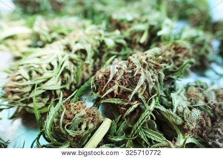 Cannabis Sativa Close Up With Lomo Effect High Quality